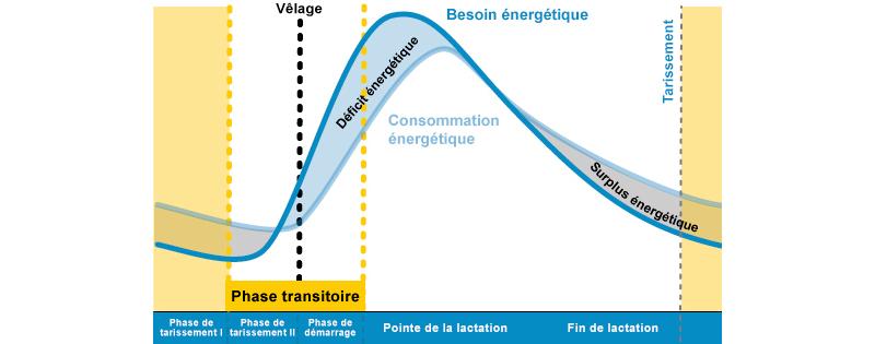cycle de la lactation